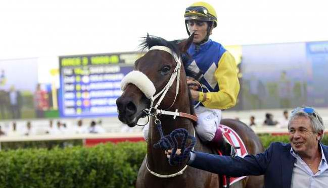 Shea Shea ready for Darley July Cup