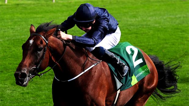 Declaration Of War horse racing