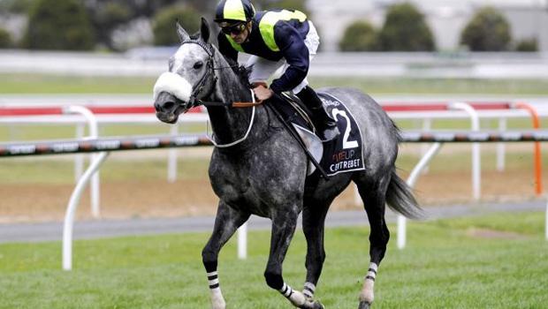 Tac De Boistron  horse racing Prix du Cadran