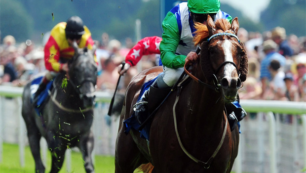 sun central horse racing