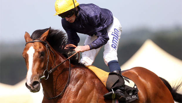 Hillstar on Qipco Champion Stakes
