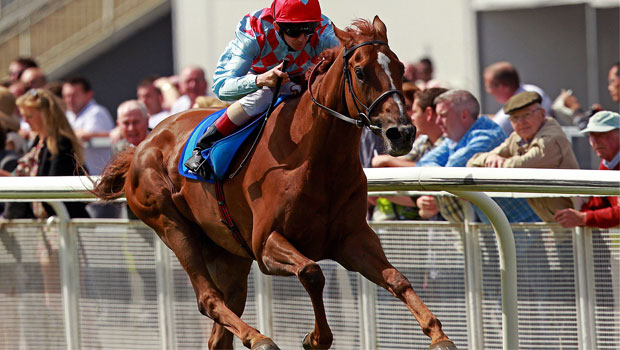 Red Cadeaux Melbourne Cup horse racing
